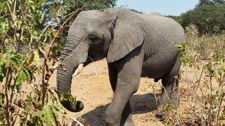 10日間の南部アフリカ4か国周遊感動体験 3日目 チョベ国立公園