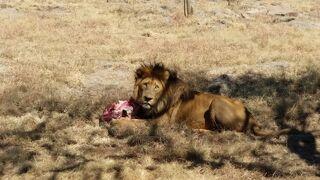 10日間の南部アフリカ4か国周遊感動体験 8日目 ヨハネスブルグ
