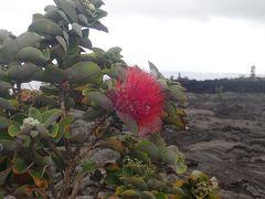 ハワイ島(17)キラウエア溶岩大地で岩盤浴とクレーターリム探検そしてプナルウ黒砂海岸のホヌ(ウミガメ)