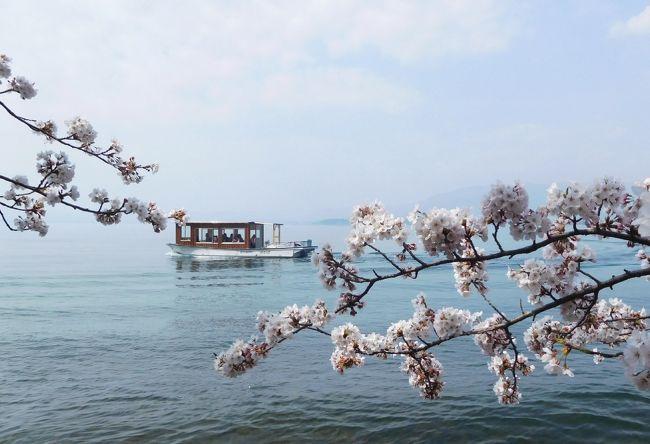 「海津大崎・長浜豊公園・余呉湖 ぐるっと琵琶湖1周 桜イイとこどり決定版 日帰りツアー」に参加して、お花見を楽しみました。<br />4月3日はお花見には早すぎると予想していたのですが、今年の桜は4月に入り、一挙に開花。例年の開花は4月第2週の海津大崎で5分咲きでした。<br />バスツアーなので、駐車場の心配が無く、のんびりと、お花見ができました。<br />3食付、お土産付きで、約9000円とは、コスパ最高!<br />