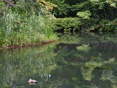 軽井沢の自然を訪ねる旅(1) 朝の雲場池