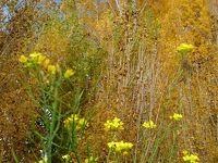タスマニアの秋 ヒラヒラ枯葉舞落ちる巨木の下/至福の時間!帰りも道に迷って素晴らしいお庭に遭遇!!