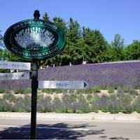 富良野ラベンダー畑と美瑛青い池、オロロンドライブウェイで道北ドライブ