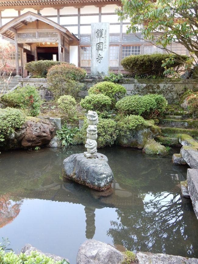 たくさんのシャクナゲが咲き誇る護国寺へ日帰りで行ってきました。
