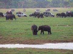 初めてのスリランカ☆ミンネリヤ国立公園で象の大群に出会うサファリ☆彡