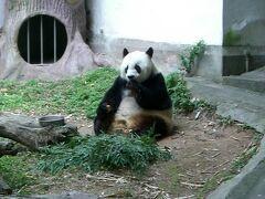 2007年春:華南へ(3)くたびれたパンダとご対面![福州-熊猫世界,西湖公園]