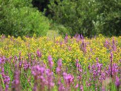 ◆涼風そよぐ羽鳥湖高原~滝と野の花めぐり、その2