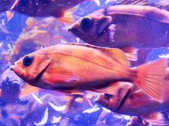 八景島-6 新・シーパラダイス 太陽の恵みをうける海と生き物たち ☆未知なる海底谷 深海リウムも
