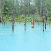 美遊バスとレンタサイクルで巡る美瑛☆雨の青い池はどんな色?四季彩の丘・北西の丘・美瑛神社―夏の終わりの北海道旅・2日目