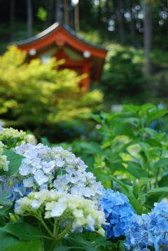 母 K子と行く京都 2009初夏 紫陽花のお花見   京都詣でNo.14