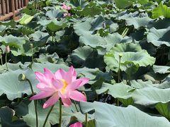 牛島一周、ハスの池に感動♪ネイチャーアイランド済州島での夏休み その2