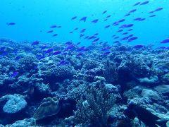 久米島と沖縄本島(11)久米島でのラストダイブはうねりが少しおさまってやっと夏のポイントへ。カスミチョウチョウウオ、ハナゴイ、クマノミ・・・