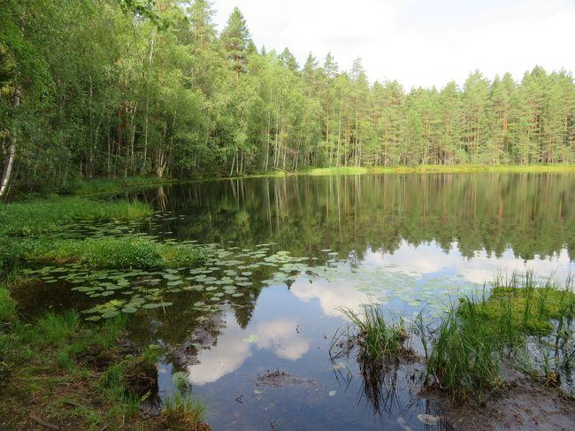 ヌークシオ国立公園 前編の続き <br /> 2日目 午前中 「森と湖コース」を、ブルーベリー摘みをしながら<br />     約10kmハイキング。<br />     午後ホテルに帰り 湖で水泳。ボート。サウナ。<br />     2泊目。<br /> 3日目 今回旅行の最終日<br />     バスのホテル前出発時刻は9:48. 12:29. 14:47<br />     12:29に乗り鉄道Albergaへ。Houpalahtiで乗り換えて<br />     空港駅へ。所要1時間半。(往路と同じ経路でヘルシンキには寄     らず。)<br />     フィンエアーで帰国の途につく。<br /><br />  バルト3国を巡ってきた後のヌークシオ国立公園であった。<br />  ここは高低差の少ない地形なので雄大な景色の眺望はない。穏やかでお  となしい風景である。やさしい自然につつまれて癒されるところであっ  た。<br />  私達は過去50回以上欧米を旅した。「行ったからには何でも見てやろ  う」と1日3万歩近く忙しく歩き周る旅をしてきた。<br />  ここヌークシオでののんびりした滞在はリラックスできて実に有意義  <br />  で あった。今後の旅のキーワードを「のんびり」に変えていこう。       <br />