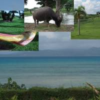 水牛がいる「水牛池」のある小浜島「はいむるぶし」滞在