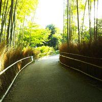 時代を越えて守られてきた竹林、早朝の竹林の小道 幻想的