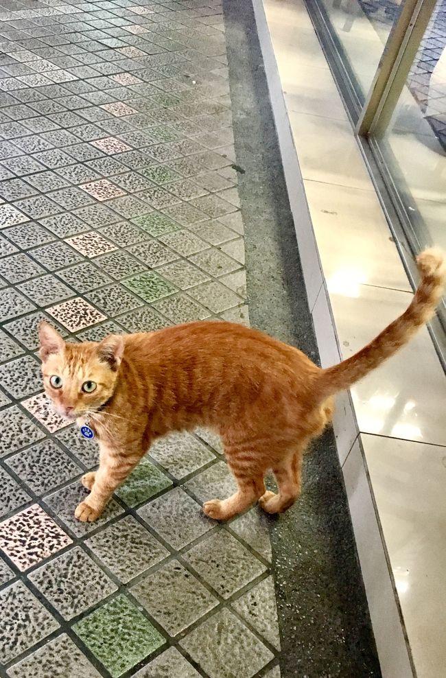 高尾、台南、九份、台北旅行で出会った動物達の紹介です。台湾は人も素晴らしいですが、動物もとってもキュートです。