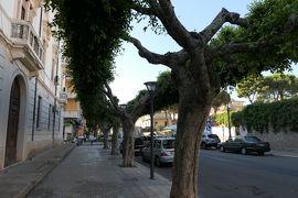 美しき南イタリア旅行♪ Vol.151(第6日)☆Crotone:クロトーネの大通りは緑の並木♪