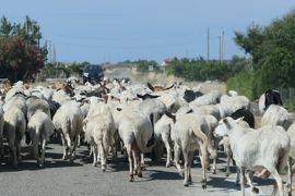 美しき南イタリア旅行♪ Vol.159(第6日)☆Capo Colonna→Le Castella:道路に羊の群れ♪
