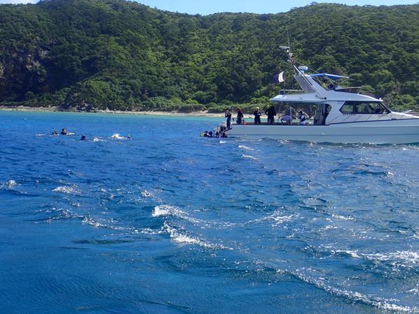 久米島と沖縄本島(18)慶良間ブルーに抱かれてダイビング。お食事中のウミガメが近い近い!
