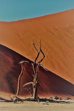 褐色の大地をゆく、 11 アプリコット色の世界に浸る