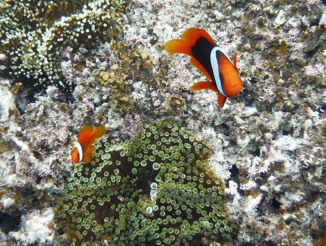 沖縄県南西部、八重山列島の島である石垣島を訪れました。八重山列島の政治・文化の中心であり列島最大の人口約4万7千人のこの島は、日本の端っこに近く(日本本土よりむしろ台湾に近い)、観光においても沖縄の離島の中でも高い人気を誇ります。<br />★ヴィラタイプのリゾートホテルを基点に、島内一周ツーリング&ドライブで島の見どころを周る。<br />★現地のアクティビティーツアーで、幻の島&青い洞窟に行きサンゴ礁シュノーケリング。