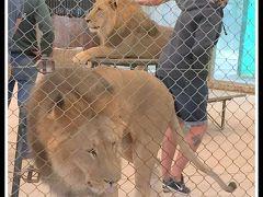うへっ!!ここ本当にヤバイ!...げに恐ろしいブエノスアイレスの【ルハン動物園 Zoo Lujan】#4(ブエノスアイレス郊外/アルゼンチン)