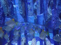 親子で初ドバイ!201808夏-6<アトランディス・ザ・パーム ホテルステイ&帰国。ロストチェンバーズ水族館>