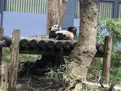 シャンシャンに会いに上野動物園へ(2018年GW)