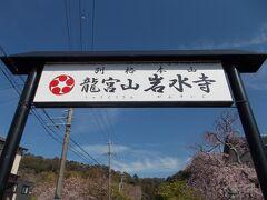 さくら桜 今日見る桜・・はままつ 浜北区『岩水寺』(お花 20の14)GLAY HOUNDS 10本