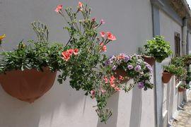 美しき南イタリア旅行♪ Vol.176(第6日)☆Santa Severina:美しき村「サンタ・セヴェリーナ」花の美しい風景♪