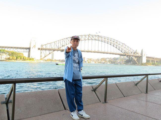 ゴールデンウィーク休暇を利用してJALの翼にてシドニー経由でニュージーランドへ行きました。<br />出発は、中部国際空港から国内線で成田空港へそしてJAL-771便にてシドニーへのフライトです。<br />シドニーキングススミス国際空港では、乗り継ぎ時間を利用してシドニー観光をしました。<br />さて今回の航空券は、JALのホームページより予約発券をしました。日本とシドニーの単純往復の料金にシドニー⇔ニージーランド往復区間がついて約5万円くらいのプラスでした。もちろんすべてビジネスクラスの利用ですからとてもリーズナブルです。<br />JAL便以外は、カンタス航空のコードシェア便も利用できるので大変便利だけでは、無くていろんなフライトも楽しめるのも魅力です。今回は、ワンワールドグループのラタム航空をSYD→AKL区間を利用しました。帰りのCHC→SYD区間は、エミレーツ航空航空を利用しました。こちらは、別の旅行記で紹介をします!<br />セントレアからJAL国内線で成田空港のフライトですが、天気がイマイチで窓からの景色は、楽しめませんでした。クラスJの座席ですからゆったりと空の旅をたのしみました。<br />成田空港で乗り継ぎですが出発までサクララウンジでゆっくりと寛ぎました。ナイトフライト備えてシャワールームの利用しました。<br />JAL-771便の機内サービスですが水平飛行に入るとおしぼりが配られてその後メニューが配られて飲み物のオーダーを取りに来ます。<br />私は、イモ焼酎の水割り、食事は、和食をオーダー、するとしばらくしておつまみ(先付け)と一緒に出てきました。<br />そして前菜です。刺身がおいしかったですね!その後、台の物、漬物、みそ汁が出てきまして最後にデザートの最中とお茶が出てきて食事は、終了です。<br />2食目以降は、アラカルトメニューをお好きな時にお好きなだけ頂ける食べ放題です!私は、到着前に和定食にラーメンを付けて頂きました。<br />ナイトフライトですが、ビジネスクラスのワイドなシートでゆっくりと休むことができました。<br />シドニーキングススミス国際空港には、早朝の到着です。入国審査と税関検査は、スムーズに行えました。(手荷物は、最終目的地のオークランドで受けるのです!)<br />乗り継ぎ時間は、約4時間でした。空港駅から電車でサーキュラーキーへ出かけました。朝のオペラハウス周辺は、観光客もまばらでした。港には、豪華客船も入港していました。<br />ハーバーブリッジとオペラハウスとカスタムハウスをカメラに収めて再び電車に乗り空港に向かいました。<br />シドニーからオークランドまでは、ラタム航空のフライト、チェックインを済ませてカンタスラウンジで休憩です。<br />ラタム航空のフライトですがラテン系のとても明るいフライトです。機内サービスは、JAL便に比べてイマイチかな?ビデオプログラムも日本語対応が無いので残念でした。ビジネスクラスの座席は、フルフラットでよかったです。<br />オークランド国際空港に到着して入国審査及び税関検査場は、大混雑、空港内の設備工事のためにレーンも絞られて通関に2時間ぐらいかかりました。<br />空港からAIRBUSで市内へホテルに宿泊しました。