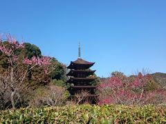 春の瑠璃光寺を回る