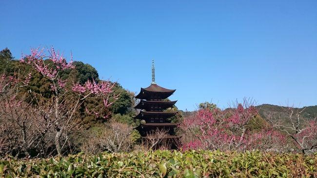 今回は山口市へ&#128643;<br />瑠璃光寺にどうしても一度は行きたくて今回彼女と行って来ました&#128516;<br />梅が綺麗な時期でここちよい暖かさ&#127804;<br />五重塔のすびらしさ、西の京と呼ばれる山口を日帰りで楽しみました&#128522;<br />