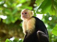 コスタリカを巡る!幻の鳥、蝶、バジリスク、ウミガメの産卵と子亀の誕生、熱帯雨林トレッキング、ボートクルーズ、温泉、様々な生物と自然探訪に、おまけにストバリケード突破までついて、コスタリカの豊かさを満喫 vol�マヌエルアントニオ国立公園は先着千人まで。急げ!