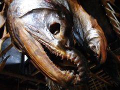 2018.09 ワープ三昧東北18切符旅行(10)村上散策・村上藩の商人町、歴史ある酒屋と鮭屋を巡る