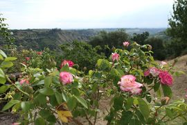 美しき南イタリア旅行♪ Vol.227(第8日)☆Pisticci:ホテルマッセリア「Torre Fiore」再び庭園やバラ園へ♪