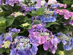 高知 紫陽花と歴史に触れる旅