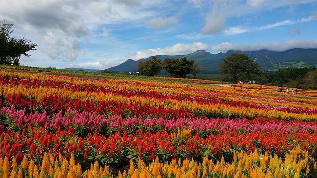 念願の那須フラワーワールドのケイトウの花畑を<br />やっと見に行ってきました。<br />天気も思いの外良くて、とっても綺麗でした。<br /><br />ついでに、話題のスポット、<br />吉永小百合さんがJR東日本のCMで訪れた雲巌寺<br />テレビ東京の情報番組で紹介された龍門の滝にも行って来ました。<br /><br />合間に、那須共同利用模範牧場や道の駅などを挟んで栃木への日帰り旅行を振り返ります。