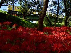 満開な彼岸花が咲き広がる入間川ののどかな初秋の風景を探しに訪れてみた