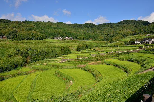 「日本の棚田百選」に選ばれた内成棚田の彼岸花です。