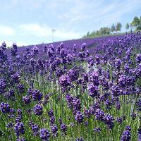 花いっぱい北海道�〜彩香の里・風のガーデン