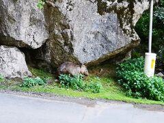 シドニー2日目は世界遺産ブルーマウンテンズ&世界最古の鍾乳洞ジェノランケーブ&野生カンガルー探検 参加