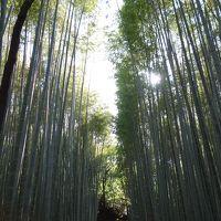 京都嵐山&大阪 息子と2人旅