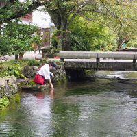 醒井宿・地蔵川の水中花、梅花藻と霧の中の伊吹山と近江八幡を観光してきた!