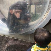 *18'9月秋。一歳児と行く旭川子連れ旅行記。。。無料で楽しめる木遊館&日本最北にある行動展示で有名な旭山動物園へ♪