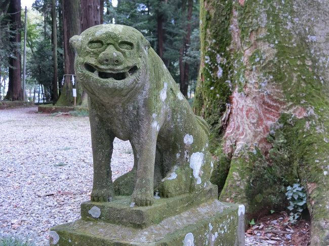 暑さも和らいできたので、日光街道歩きを再開しました。今回は間々田から小山まで、寄り道含めて約15kmです。<br />ちょうどお彼岸だったので、街道沿いのお寺にはお墓詣りに来ている人たちが多かったです。<br /><br />参考:<br />宇都宮国道事務所 日光街道御徒マップ<br />http://www.ktr.mlit.go.jp/utunomiya/utunomiya_nikkomap001.html