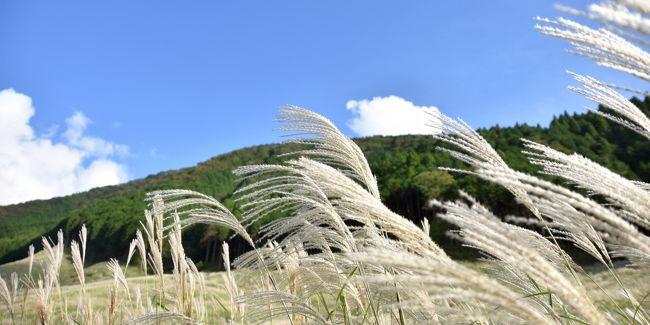 平成30年9月24日に開催されたススキ祭の様子です。<br />