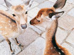古墳壁画を見るために奈良2泊3日①