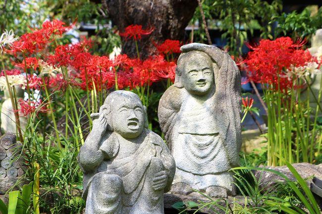 9/24の朝日新聞に、大和市にある「常泉寺」で彼岸花が見頃を迎えているとの記事があり、面白そうなので早速見に行ってきました。<br />常泉寺のことはこの記事で初めて知ったのですが、「花のお寺」、「河童のお寺」と知られ、特に春のミツマタ(神奈川花の名所100選のひとつ)と、秋の彼岸花が有名なんだとか。<br />また、河童の寺といわれる所以は、以前この寺に水の湧き出るところがあり、寺の名前も「清流山常泉寺」いい、水との縁が深かったことから河童を祀っているからだといいます。<br />境内には、5,000輪の彼岸花と300体の河童と多くの石仏が集い、それらがうまくコラボしていて楽しい境内散策となりました。<br /><br />常泉寺のHP<br />http://www.jousenji.com/main/jousenji/jousenji.html