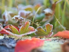 紅葉し始めた森をぐるっと日帰りトレッキング☆長野県:志賀高原